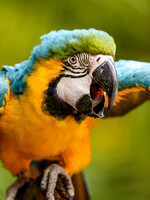 Macaws (gallery)