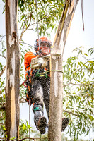 Tree clearing Jan 17 - climbing (gallery)