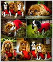 Daisy, Ruby and Elka in their red jackets