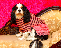 07DL8644 Pets Charming dress Daisy pink stripe 2048px