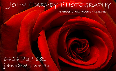 business card - red rose