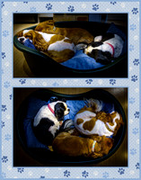 Daisy, Ruby and Elka in green bed - montage