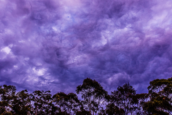 stormy sky and trees #1