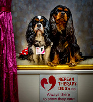 Nepean Therapy Dogs opening 20 Aug 16 (gallery)
