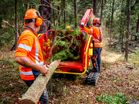 Tree clearing Jan 17 (group)